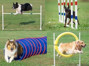dog-agility1.jpg